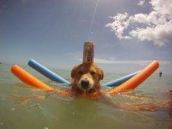 Αυτή είναι η σωστή εκπαίδευση σκύλου #FunnyPhotosGR #funnyphotos #funnyanimals #dogs #dog #funnydogs