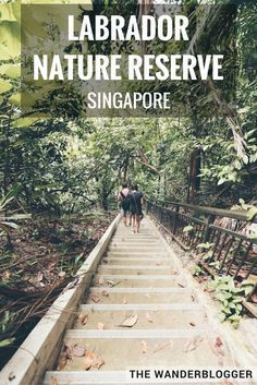 6 Things To Do At Labrador Nature Reserve In Singapore