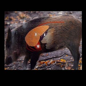 Ferral hog | Wild Hog Paper Target
