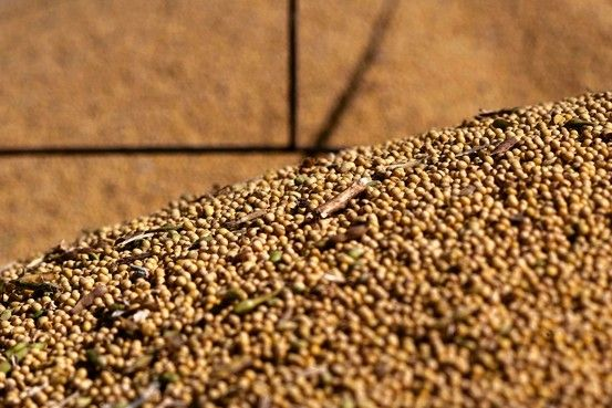 Corn, Soybean Prices Slide on Robust U.S. Supplies - WSJ. But last season a record crop was immediately taken up by Asia and prices rose anyway.