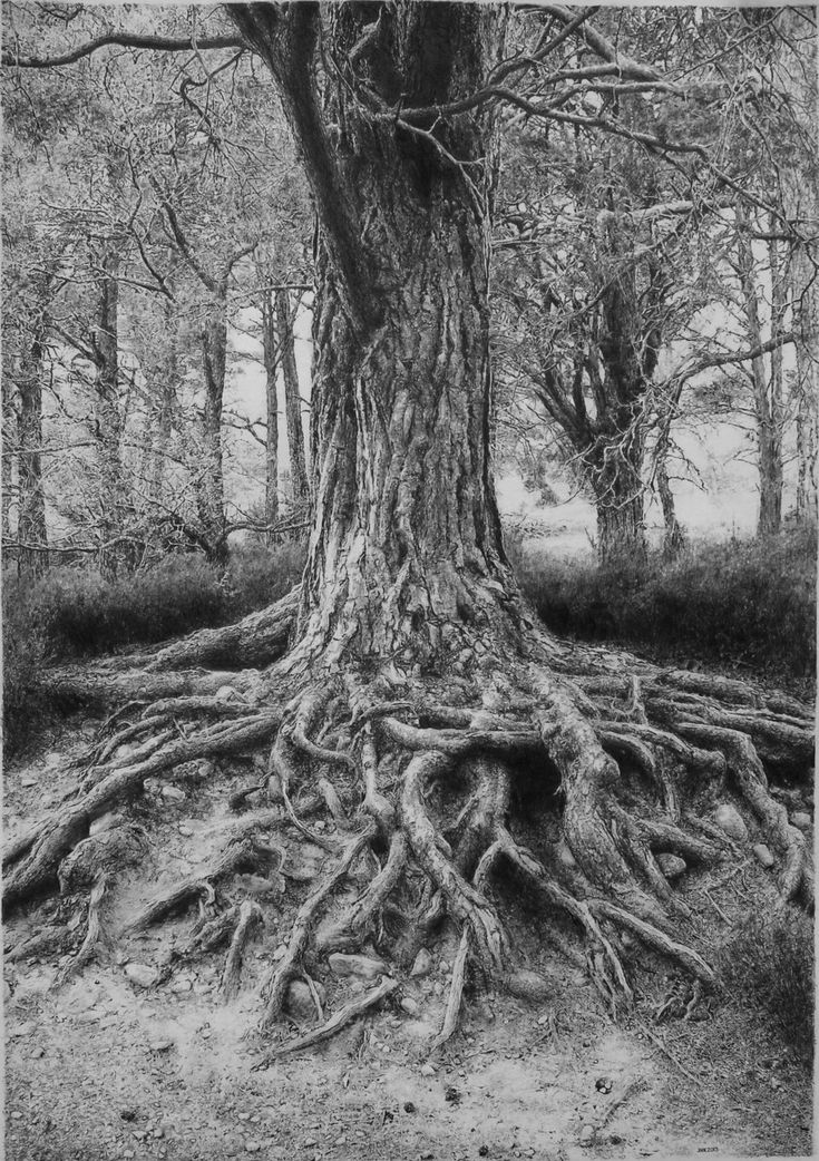 Tree drawings in pencil with roots for Best tree drawing