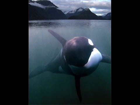 Luna, a little whale who got lost like a kid in a supermarket. He was lonely  craved contact with humans! Amazing story of his life.