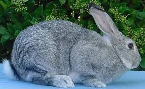 Rabbit farming is my style because rabbits are hot money makers: http://moneymakerskenya.com/moneyblog/rabbits-are-hot-money-makers-in-kenya/