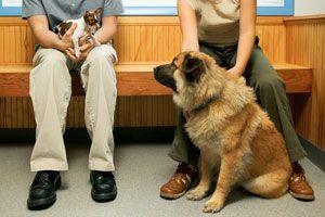How Pet Health Insurance Works. Cesar Millan