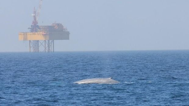 Massive blue whale population found in proposed seabed mining area  JEREMY WILKINSON  Last updated 16:12, February 22 2017  An expert says blue whales and seabed mining won't mix well.