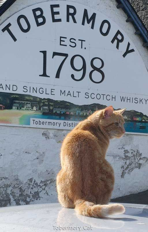 Tobermory Cat, the world's first famous for being famous celebrity cat.