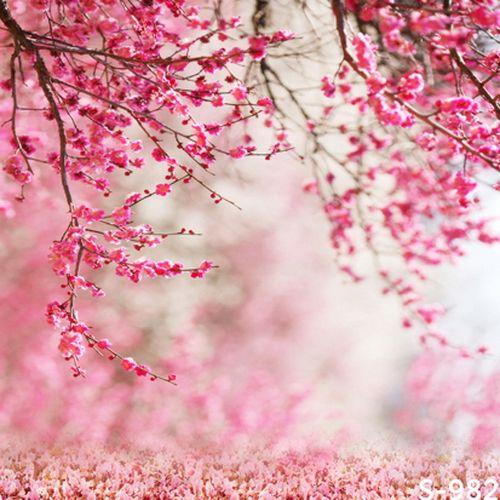 5x6.5FT Custom Pink Flowers Backgrounds Photography Backdrops Photo Studio Children Photo Backdrops For Photographic Backgrounds.  If want it,please click here   http://www.amazon.com/dp/B01E3QROC8