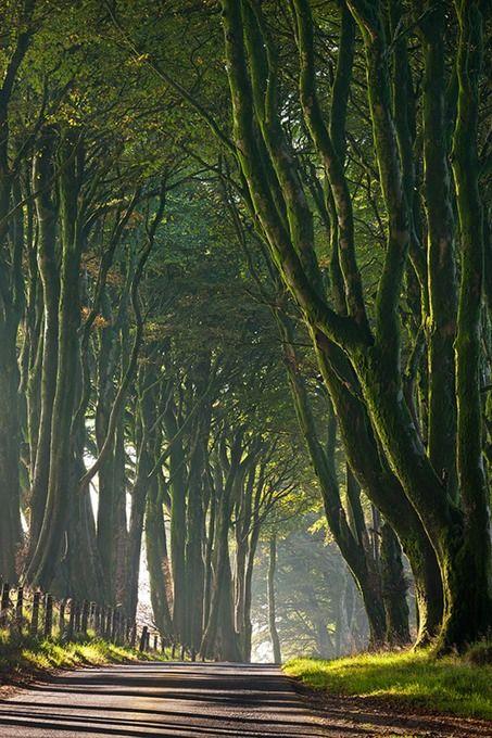 Tree-lined lane (Dartmoor, Devon) by Caine-Douglas