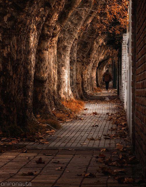 Autumn Remains, by Onironauta..., via Flickr