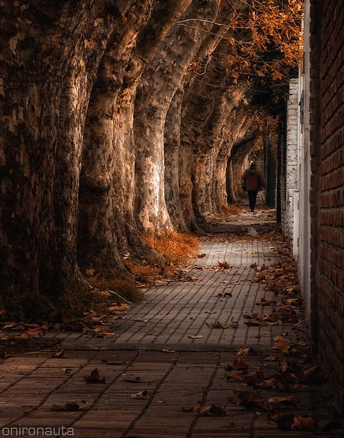tolkien  - The Lord of The Rings - The wall along the border of the old Forest... Frodo and his hobbit friends disappear between the trees