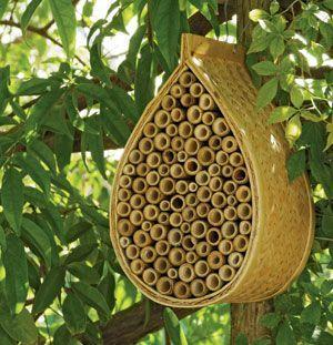 Amazing Mason Bees are Nature us Best Pollinators
