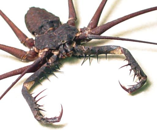 African cave spider.   Not going to any caves in Africa!  Actually not even stepping foot in Africa!