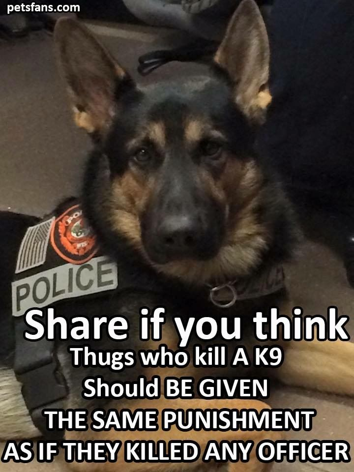 I agree with this. Partly. I think they should be punished way more than an officer. Dogs are life. I ❤️