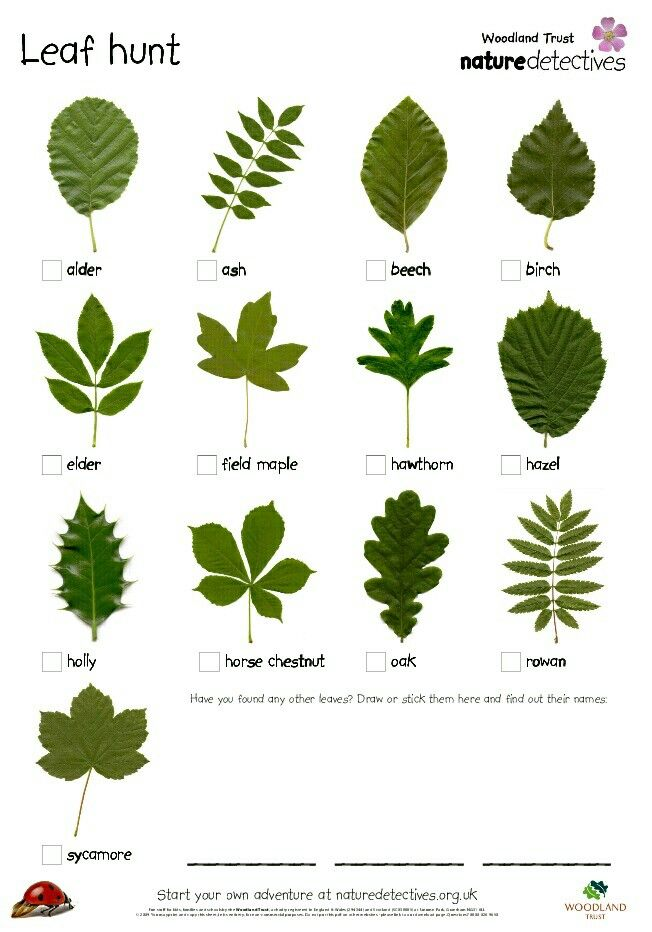 Leaf identification                                                                                                                                                      More