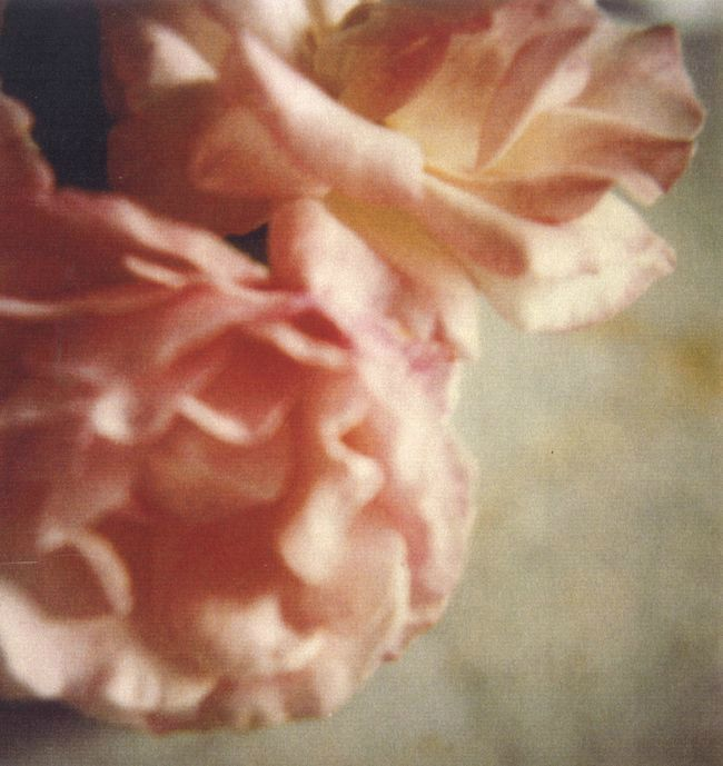 Cy Twombly - Roses, Gaeta, 2004, photography