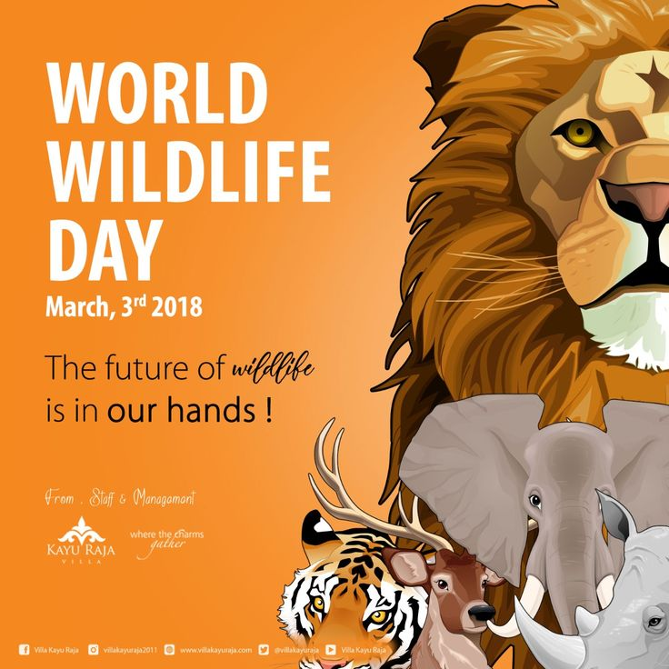 Happy World Wildlife Day March 3rd, 2018 The future of wildlife is in our hands ! . www.villakayuraja.com . #world #wildlife #bali #seminyakvillas #villakayuraja #luxury #holiday #liburanseru #wonderfulindonesia