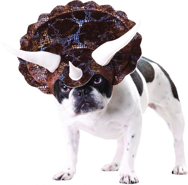 I think it's a bad idea to dress your dog as a Triceratops. A Stegosaurus, okay, but never a Triceratops!