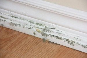 Is mold lurking in your home? Signs, testing, remediation advice and more.