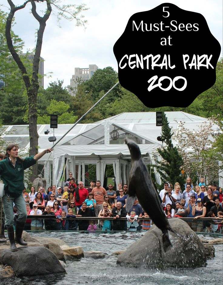 5 Must-Sees at New York's Central Park Zoo                                                                                                                                                      More