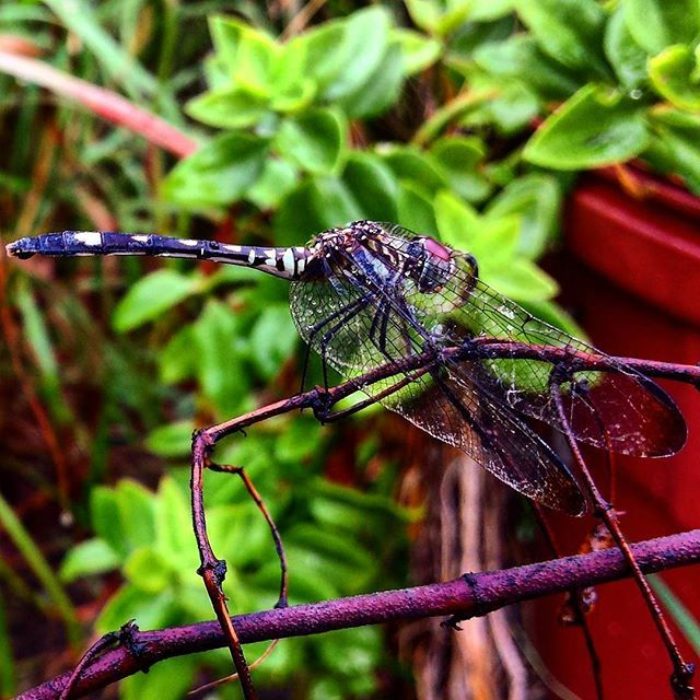 My outdoor friends #photography #naturephotography #outdoors #friends #dragonfly