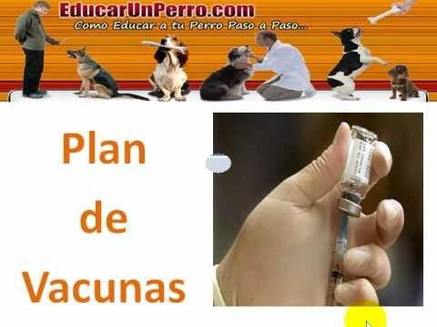http://youtu.be/LcTOagz7r58 Video tutorial Plan de Vacunacion en Perros