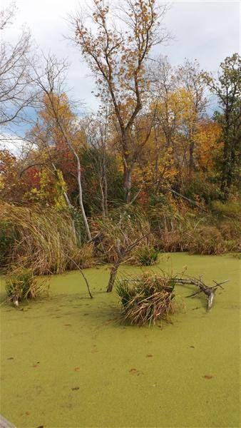 Algae pond north dakota photographer cl westerfield north dakota