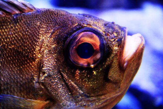 Es Gibt Ja Schon Ein Hassliche Fische Aber Irgendwie Hat Der Was Cooles Fishgoesblub Fishgoblub Fish Fisch Fischi Fishnet Fisch Tierpark Animals Fish