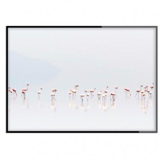 """The flamingo walk"" - Poster"