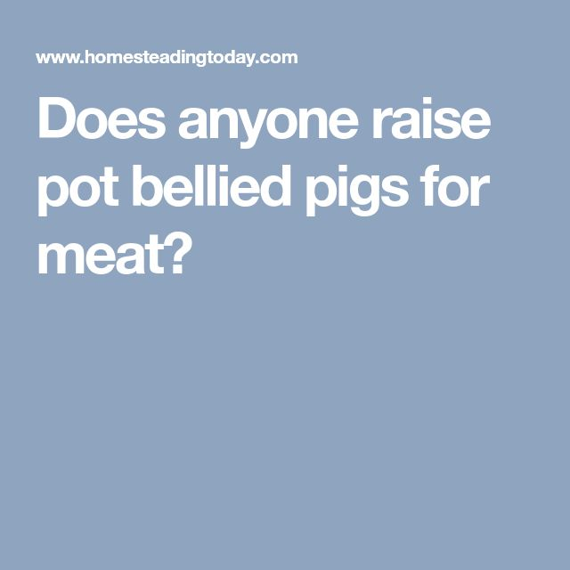 Does anyone raise pot bellied pigs for meat?