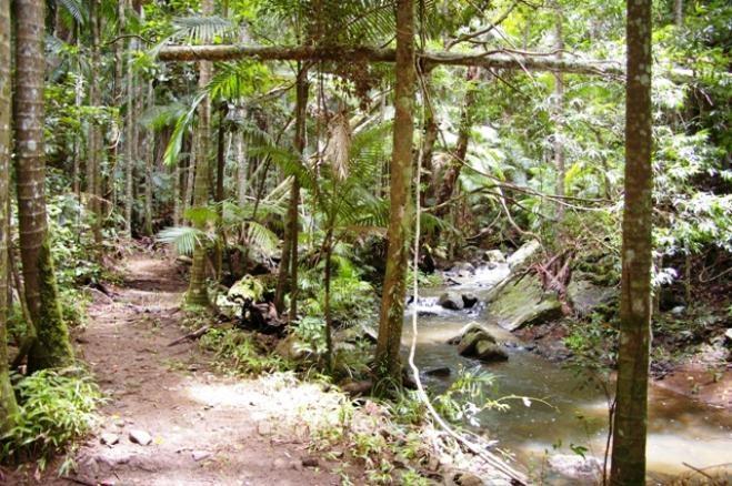 Walking Trails  - Maleny Sunshine Coast Hinterland QLD