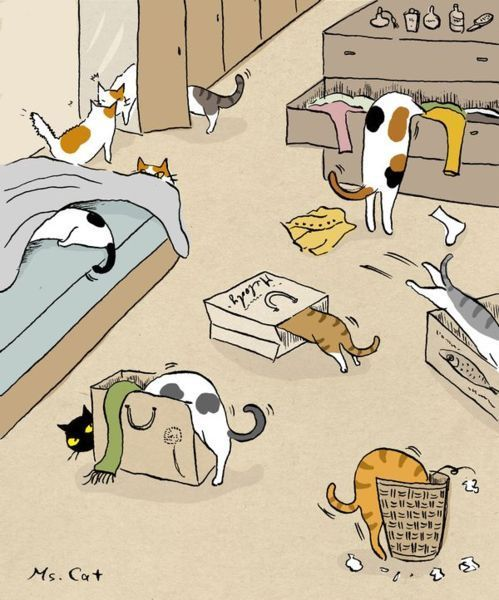 All about cats :).