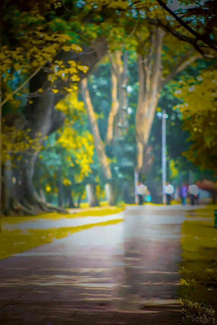 Pin By Randhir Raj On Background Images Hd Blur Background Photography Blur Photo Background Light Background Images