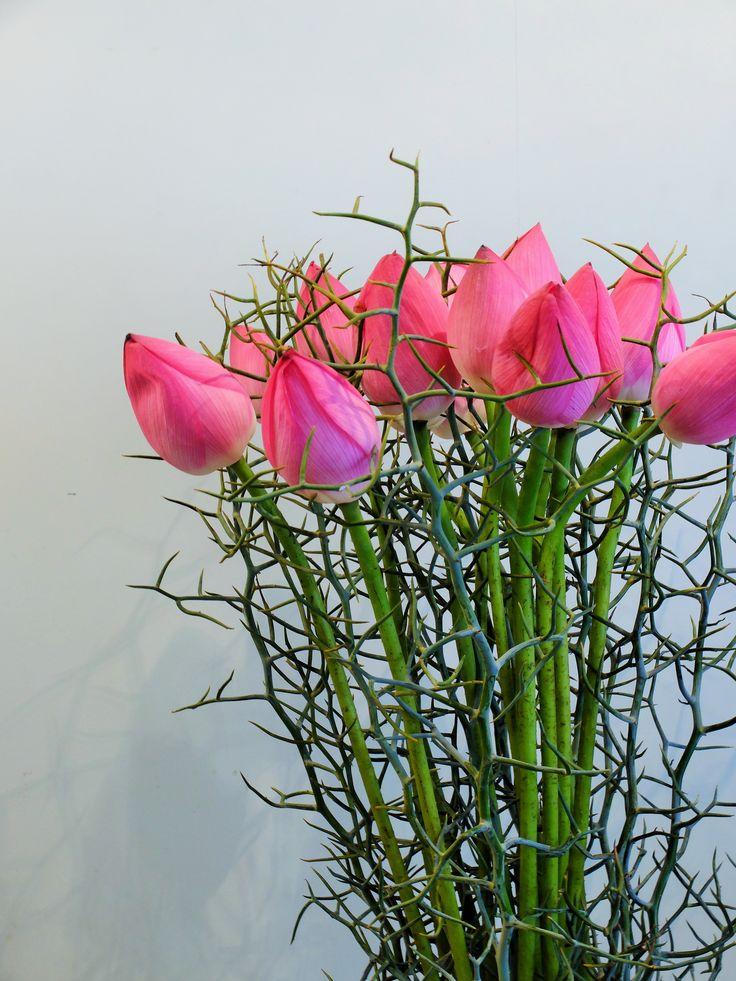 Lotus Flower And Reindeer Wattle Part 37