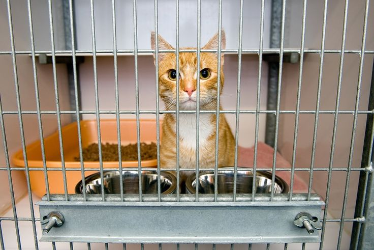 Cat Boarding for The Highest Comfort & Care for Your Pet. #CatBoarding #Cattery