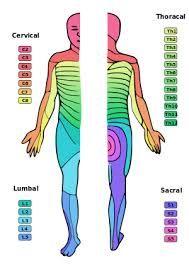 脊髄損傷の解剖生理からリハビリの話 | 医療.AUGKING-LAB.INFO