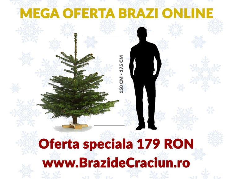 brazi de craciun oferta speciala, comanda brazi de Craciun online cu livrare gratuita, cele mai bune preturi la brazi craciun: https://www.floridelux.ro/craciun-2016/brazi-de-craciun-2016/