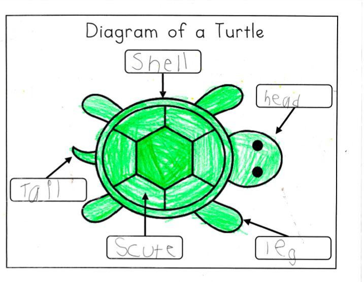 4211f3d73f8598e2b2c805b9b67f02cd kindergarten writers workshop kindergarten writing label turtle diagram wiring diagram schematic name