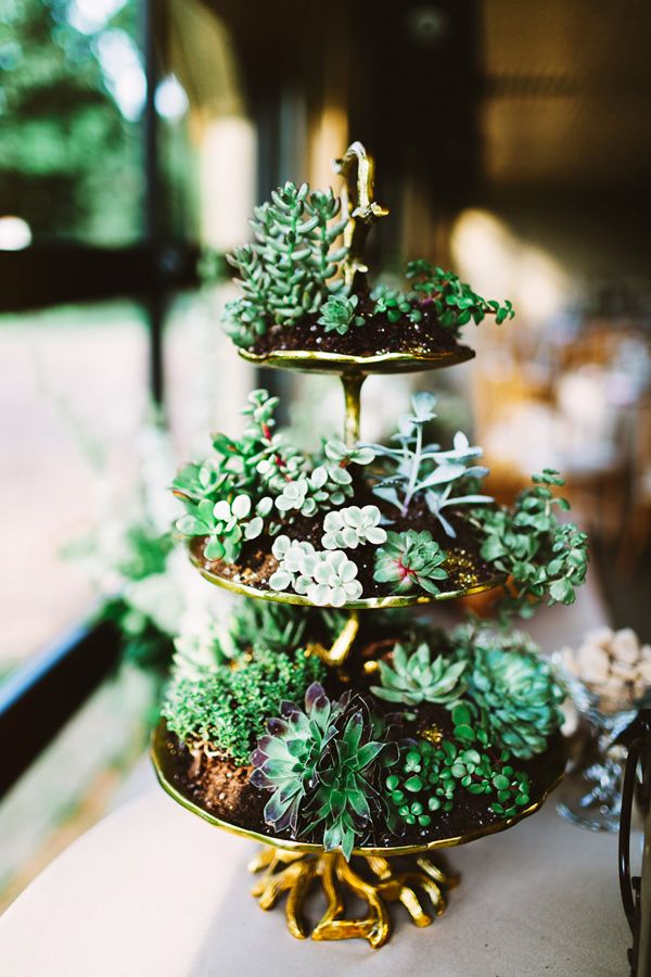 succulent display - photo by Pat Furey http://ruffledblog.com/stylish-pennsylvania-bird-sanctuary-wedding