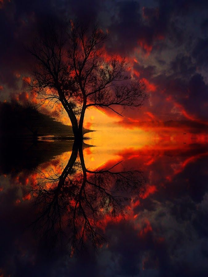 Amazing tree reflection during sunset