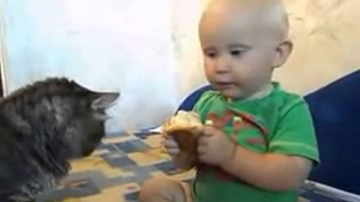 The cat and the baby. One loaf for two   Кот и малыш. Одна булка на двоих