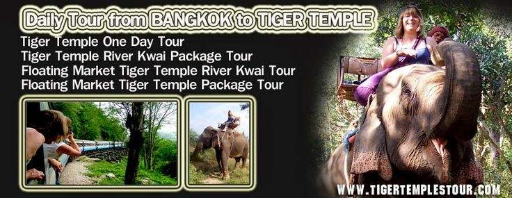 iger Temple Tour Bangkok Thailand visit Tigers at Tiger Temple Riverkwai Bridge Kanchanaburi Thailand Tiger Temple Tour Daily Tour from Bangkok to River Kwai Kanchanaburi Floating market tiger temple tour find more Tiger Temple Tour Package with Tiger Temple Tour Bangkok