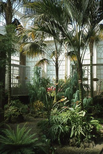 Palm trees in the conservatory.                                                                                                                                                                                 More
