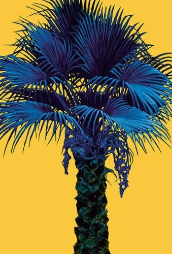palm tree, blue and yellow