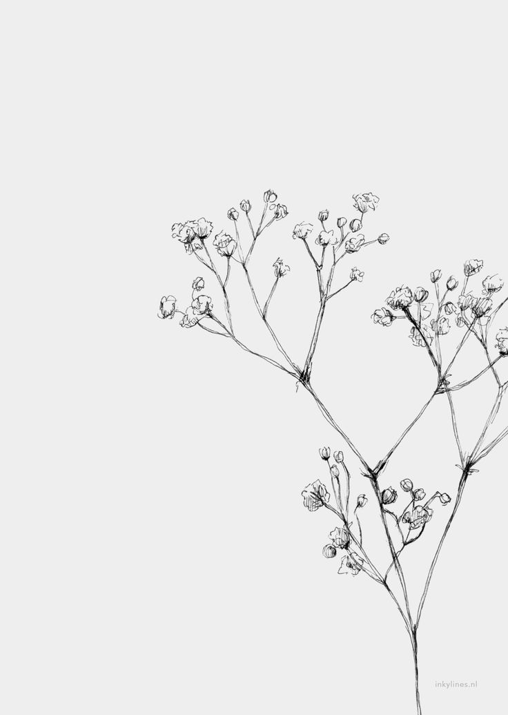 Flowers Gypsophila In 2020 Flower Drawing Flower Sketches Floral Drawing