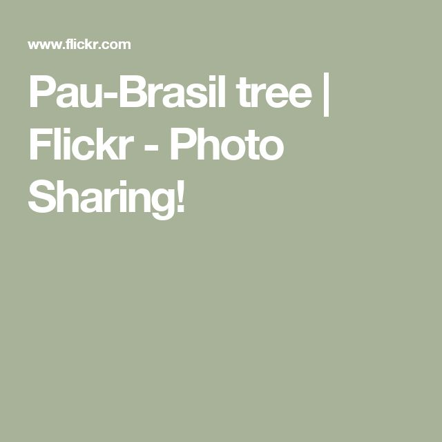 Pau-Brasil tree | Flickr - Photo Sharing!