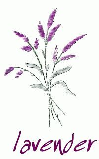 how to draw lavender flowers step by step