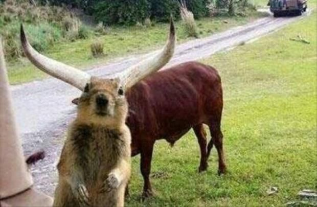 Horned SquirrelPhotobomb, Photos Bombs, Funny Pics, Squirrels, Funny Animal Pics, Funny Pictures, Funny Animal Photos, Funny Dogs Pictures, Dogs Funny