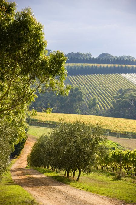 Mornington Peninsula_Vineyards and Wineries (9), Victoria, Australia.