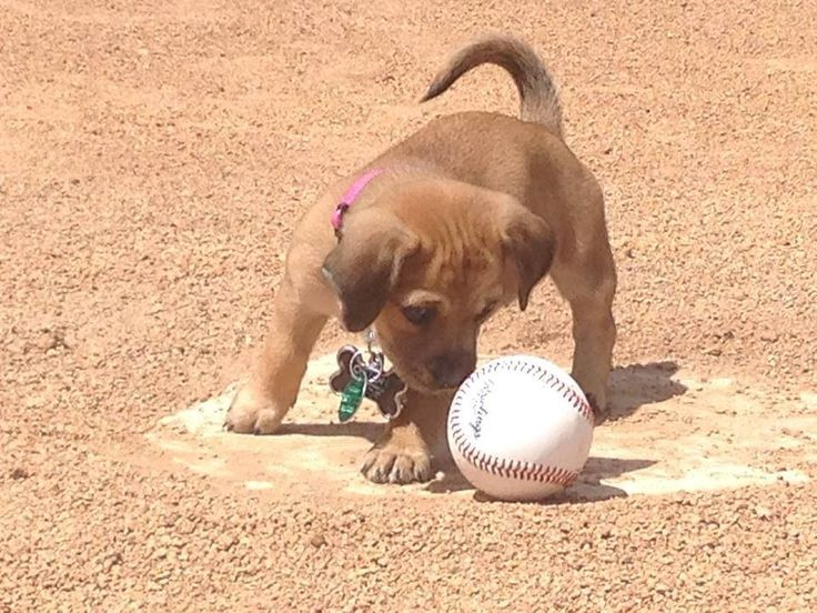 he 7-week-old pup was found crying and alone last month after being dumped in the parking lot of Grayson Stadium in Georgia, home of the amateur baseball team the Savannah Bananas. For the love of animals. Pass it on. #savannahbananas