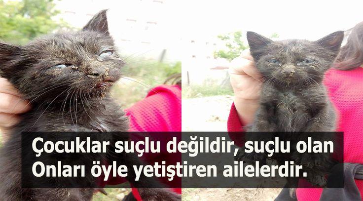 Biliyor muydun ? /// Çocuklar Tarafından Diri Diri Kuma Gömülen Yavru Siyah Kedinin hikayesi…